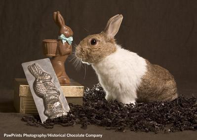 real rabbit with chocolate rabbit