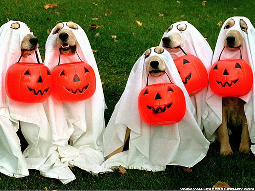 How to Have a Happy (and Safe!) Halloween for Your Pet | Unity ...