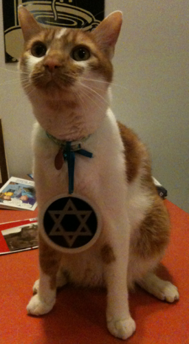 Abby's Hanukkah Kitty
