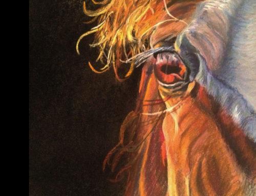Closeup horse